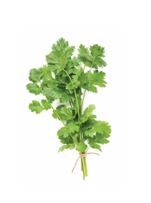 Zaļā Koriandra ēteriskā eļļa (Coriandrum sativum), 15ml