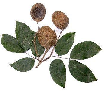 Kopaiba ēteriskā eļļa (Copaifera reticulata, officinalis, coriacea, and langsdorffii), 15ml