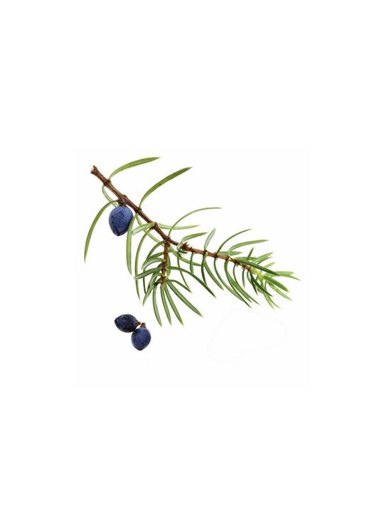 Kadiķogu ēteriskā eļļa (Juniperus communis), 5ml