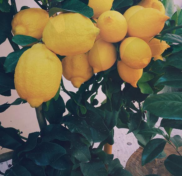Citrona ēteriskā eļļa (Citrus limon), 15ml