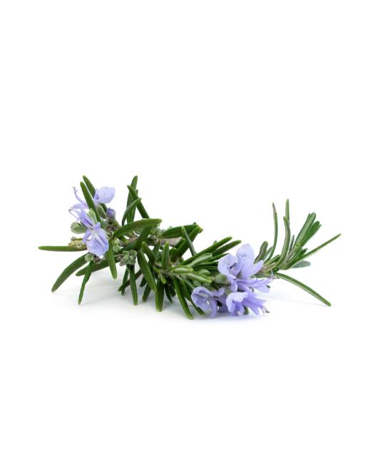 Rozmarīna ēteriskā eļļa (Rosmarinus officinalis), 15ml